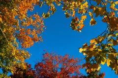 Foglie e cielo blu di giallo di autunno Fotografia Stock Libera da Diritti