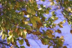 Foglie e cielo di autunno asciutti Immagini Stock