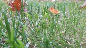 Foglie e foglie di erba immagini stock libere da diritti