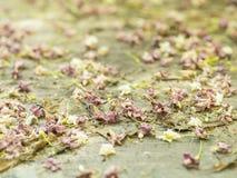 Foglie e fiori caduti primo piano Immagine Stock