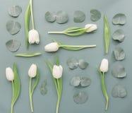 Foglie e fiori composti da sopra Fotografia Stock Libera da Diritti