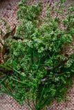 Foglie e fiori di Neem del primo piano Fotografie Stock