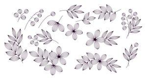 Foglie e fiori eleganti in bianco e nero con l'insieme di elementi floreale delle vene, vettore royalty illustrazione gratis