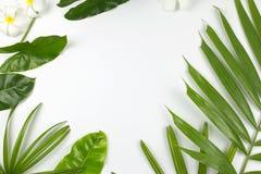 Foglie e fiori tropicali di plumeria su fondo bianco Fotografie Stock