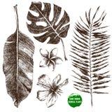 Foglie e fiori tropicali disegnati a mano Fotografie Stock Libere da Diritti