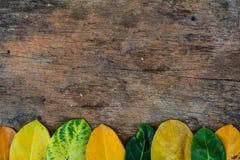 foglie e fondo di legno Fotografia Stock Libera da Diritti