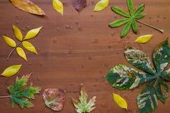 Foglie e gocce di pioggia di autunno Fotografie Stock