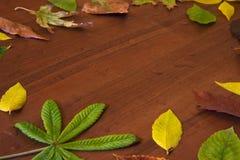 Foglie e gocce di pioggia di autunno Immagini Stock