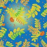 Foglie e mazzi di bacche di una sorba su un fondo di cielo blu Modello senza cuciture delle foglie e delle bacche mature della ce Fotografia Stock Libera da Diritti