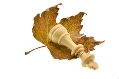 Foglie e pezzo degli scacchi di autunno isolati su fondo bianco fotografie stock