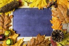 Foglie e pigne di autunno fotografia stock