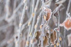 Foglie e rami coperti di ghiaccio congelati Fotografia Stock