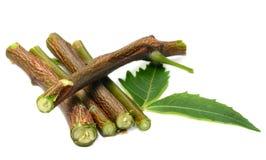 Foglie e ramo di erbe del neem Fotografia Stock