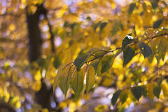 Foglie ed albero di autunno asciutti Fotografia Stock