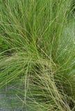 Foglie fini verdi della pianta Fotografia Stock Libera da Diritti