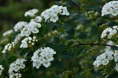 Foglie, fiori e un insetto Immagine Stock