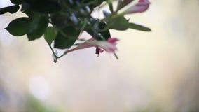 Foglie, fiori in una brezza archivi video