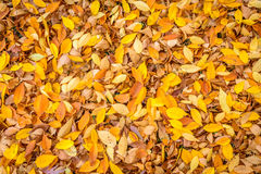 Foglie, foglie, foglie Fotografia Stock Libera da Diritti