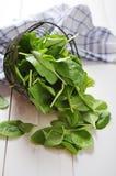 Foglie fresche degli spinaci immagine stock