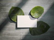 Foglie fresche dell'albero e biglietto da visita bianco rappresentazione 3d Fotografie Stock Libere da Diritti