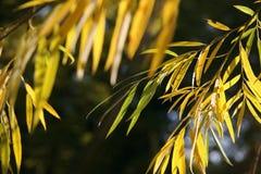 Foglie gialle del primo piano in autunno Fotografie Stock Libere da Diritti