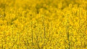 Foglie gialle della pianta in Windy Day video d archivio
