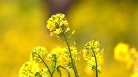 Foglie gialle della pianta in Windy Day archivi video