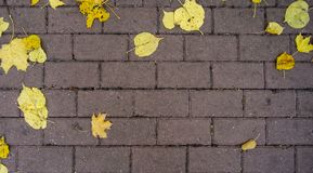 Foglie gialle di autunno sulle lastre per pavimentazione immagini stock libere da diritti