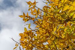 Foglie gialle di caduta di autunno fotografia stock libera da diritti