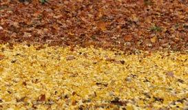 Foglie gialle e marroni sulla terra Immagini Stock Libere da Diritti