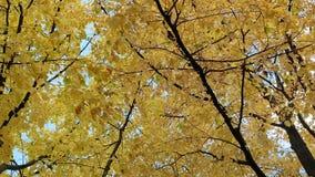 Foglie gialle e rosse in autunno al giorno soleggiato video d archivio