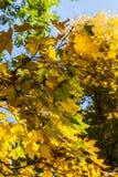 Foglie gialle ed arancio, autunno in parco, Varsavia, Polonia Fotografia Stock Libera da Diritti