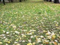 Foglie gialle su erba verde Fotografia Stock