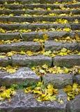 Foglie gialle su una scala antica fotografia stock