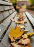 Foglie gialle sul banco di legno Fotografia Stock