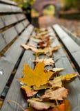 Foglie gialle sul banco di legno Fotografie Stock