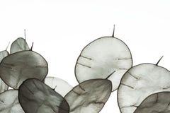 Foglie insolite con una mancia in lampadina Struttura delle foglie isolate su fondo bianco Stile di Eco, materiali naturali immagine stock libera da diritti