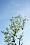 Foglie isolate sui precedenti del cielo blu Fotografie Stock Libere da Diritti