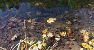 Foglie luminose di autunno cadute nell'acqua nella foresta archivi video