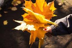 Foglie luminose di autunno in mano del bambino immagini stock libere da diritti