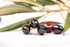 Foglie mature della foglia matura delle olive isolate nel fondo bianco Immagine Stock