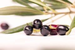 Foglie mature della foglia matura delle olive isolate nel fondo bianco Immagini Stock Libere da Diritti