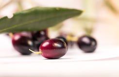 Foglie mature della foglia matura delle olive nel bianco Fotografia Stock