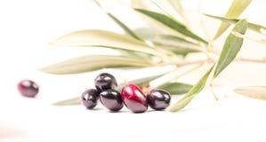 Foglie mature della foglia matura delle olive nel bianco Fotografie Stock