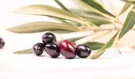 Foglie mature della foglia matura delle olive nel fondo bianco Fotografia Stock