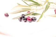 Foglie mature della foglia matura delle olive nel fondo bianco Fotografia Stock Libera da Diritti