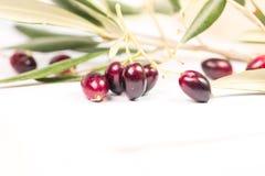 Foglie mature della foglia matura delle olive nel fondo di bianco 1 Fotografia Stock Libera da Diritti