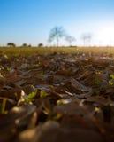 Foglie morte su erba in un parco Fotografie Stock