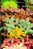 Foglie multicolori Fotografie Stock Libere da Diritti