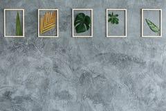 Foglie nei telai di legno fotografie stock libere da diritti